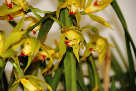 colorful orchid parasitic plants bloomed in spring Stock Photo