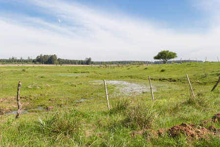 Argentinian countryside landscapes with shades of green yellow flowers cattle and streams