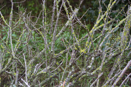 textured background of bare branches with mosses and green mold Stock Photo