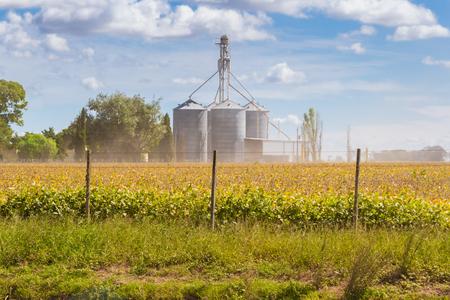 Plantación de soja en el campo con silos desenfocados en el fondo