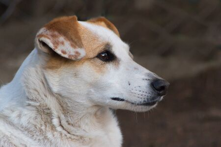 lonely stray dog portrait with sweet look