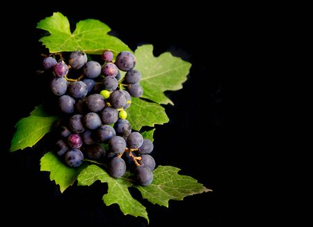 bunch of fresh grapes and grape leaves isolated on black background
