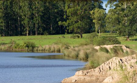 field landscape with stream and eucalyptus afforestation in Federacion Entre Rios Argentina