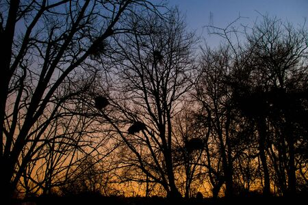 sunset landscape with blue and orange colors and silhouettes of trees