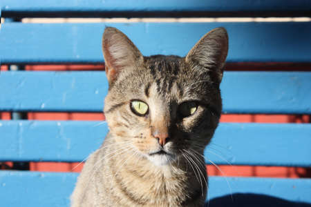 attentiveness: a cat watch in a blue bench Stock Photo
