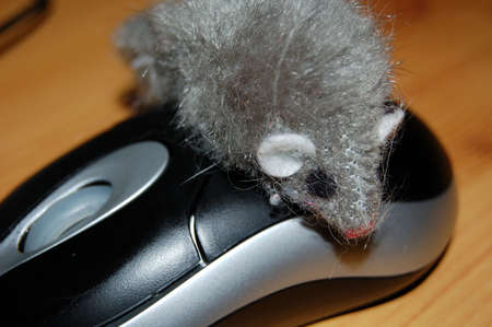 the computer mouse Stock Photo - 822756