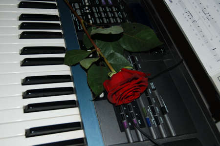 the electric piano and the red rose Zdjęcie Seryjne