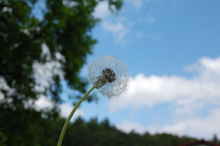 blowball: the blowball under the sky