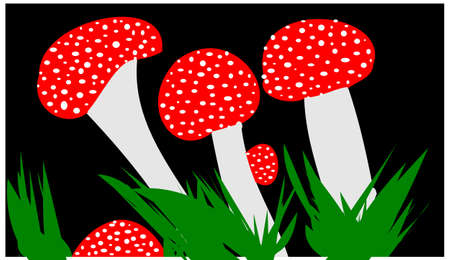 agaric: fly agaric on black background