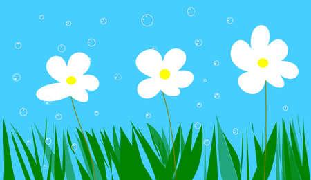 blowball: daisies and blowball