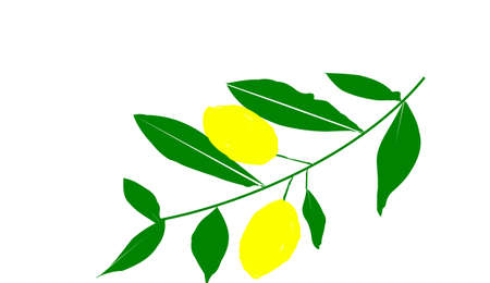 lemon on white background Zdjęcie Seryjne