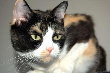 mammalian: the cat portrait