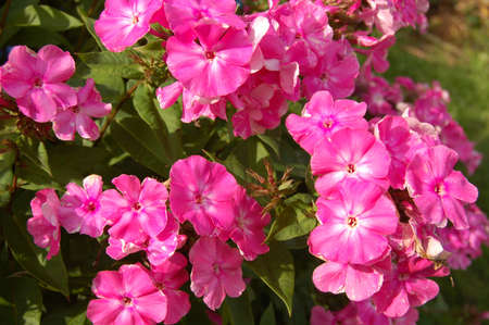 pink flowers for decoration