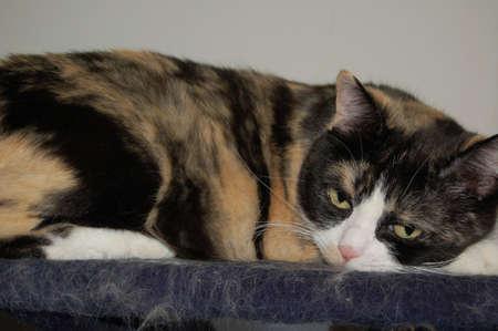the portrait of the cat Zdjęcie Seryjne
