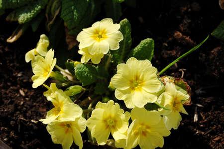 yellow flowers for decoration Zdjęcie Seryjne