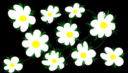 daisies on black background