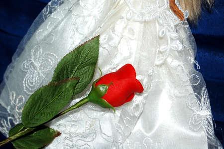 the red rose Zdjęcie Seryjne