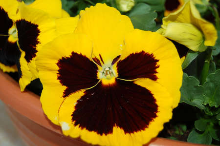 yellow flower for decoration
