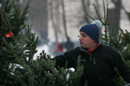 Bucarest, Rumania, 20 de diciembre de 2009: Un hombre selecciona un árbol de Navidad natural en un mercado de árboles de Navidad en Bucarest.