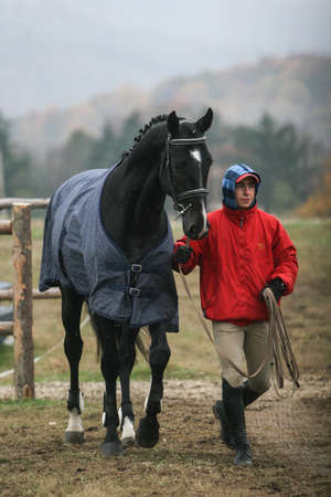 stakes: Campina, Romania, November 1, 2009: A jockey trains his horse before a horse jumping competition in Campina. Editorial