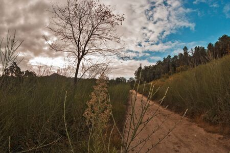 dirt road and tree in the mountain surrounded by vegetation and with a blue sky Stok Fotoğraf - 132613564