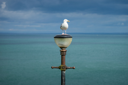 Seagull standing on street light with turquoise sea background at Tenby Beach, Wales