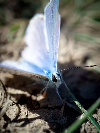 Male western tailed-blue butterfly resting on the ground, blurred background.
