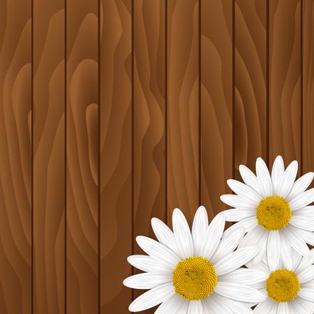 ox eye daisy: Chamomiles Background