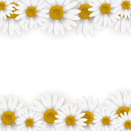 daisy flower: Daisies frame