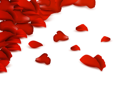 Background of red rose petals on a white background Vector