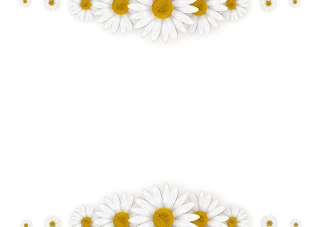 Daisies frame on a white background