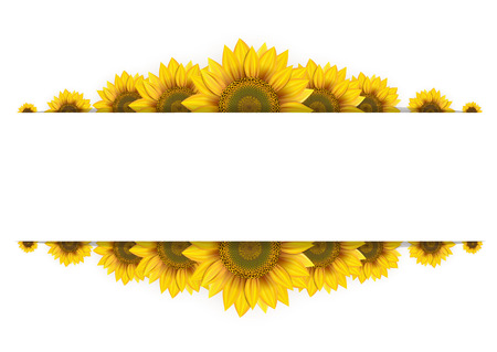 sunflower seeds: Frame of sunflowers on a white background
