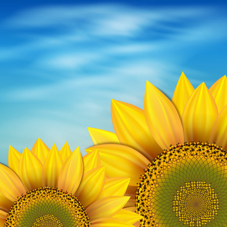 crop circle: Sunflowers against the blue sky