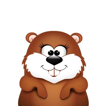 groundhog: Marmot on a white background. illustration.