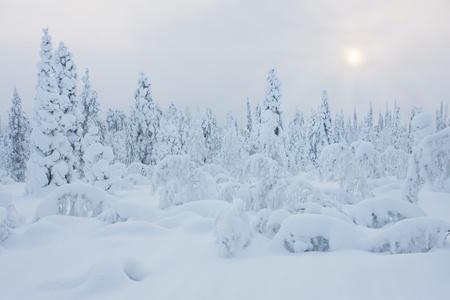 finland�s: Invierno fr�o y con nieve en Laponia