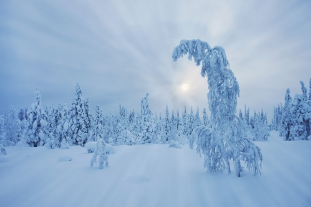 Stunning Lapland wilderness in winter photo