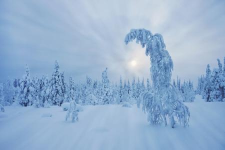 lapland: Stunning Lapland wilderness in winter