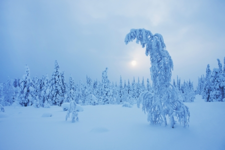 Magical Lapland winter scene photo