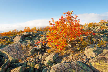 Lapland highlands in autumn Stock Photo
