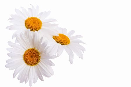 Closeup of chamomile bouquet on white background with clipping path photo
