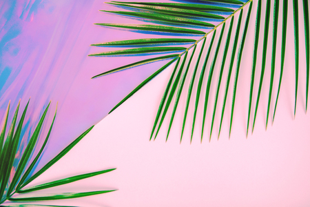 Green palm leaves on pastel colored holographic and pink diagonal divided background. Tropical conceptual minimal surreal summer layout. Flat lay design with copy space. Imagens