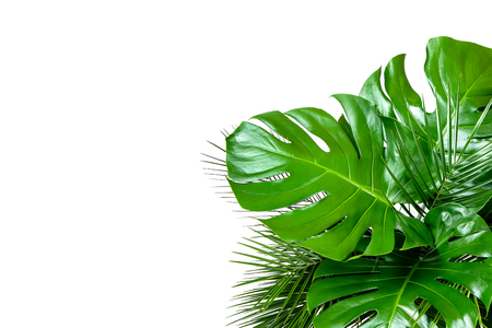 Close up of bouquet of various fresh tropical leaves isolated on white background. Design template with copy space for text. Top view, flat lay Imagens