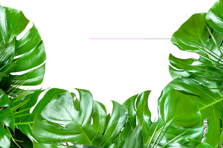 Close up of bouquets of various fresh tropical leaves isolated on white background. Design template. Frame with copy space for text. Top view, flat lay