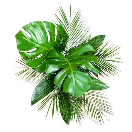 Bouquet of various fresh tropical leaves isolated on white background. Top view, flat lay Imagens