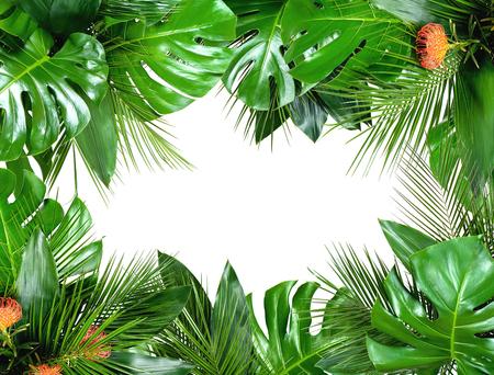 Nahaufnahme von Blumensträußen aus verschiedenen frischen tropischen Blättern isoliert auf weißem Hintergrund. Designvorlage. Rahmen mit Kopienraum für Text. Ansicht von oben, flach