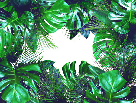 Close up of bouquets of various dark green fresh tropical leaves isolated on white background. Design template. Frame with copy space for text. Top view, flat lay