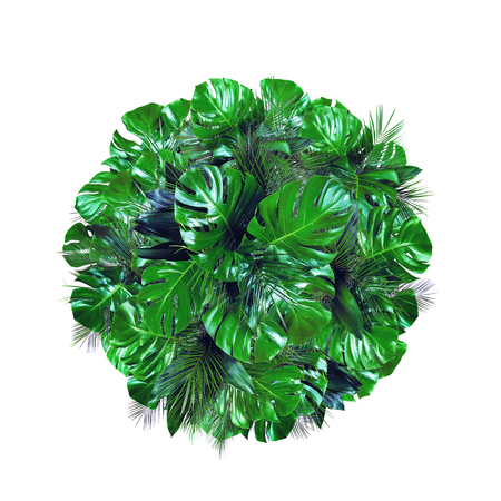 Tropical dark green jungle plant leafs circle shape isolated on white background