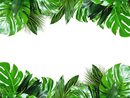 Close up van boeketten van verschillende groene verse tropische bladeren geïsoleerd op een witte achtergrond met uitknippad. Ontwerpsjabloon. Frame met kopie ruimte voor tekst. Stockfoto