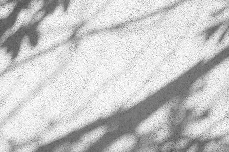 Ombre grise des feuilles sur un mur texturé en béton blanc avec rugosité et irrégularités. Fond de concept abstrait nature neutre Banque d'images