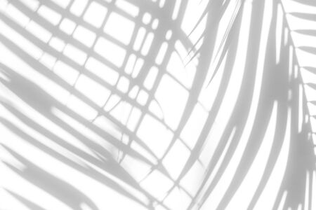 Overlay effect for photo. Gray shadow of the leaves on a white wall. Abstract neutral nature concept blurred background. Dappled light.